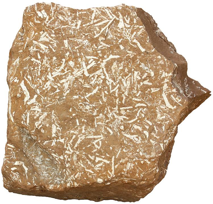 Oil shale sample