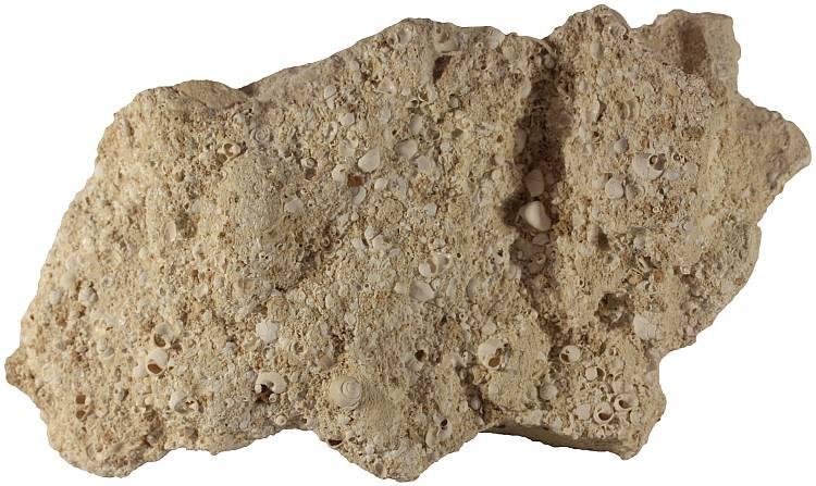 Coquina - Sedimentary Rocks