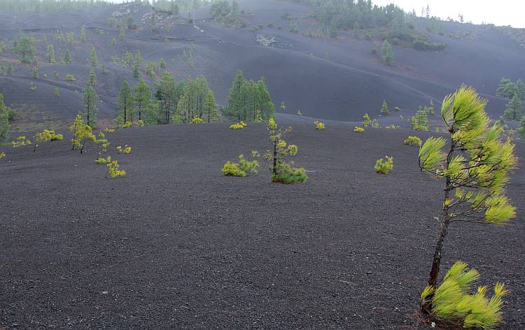 Field of scoriaceous lapilli in La Palma