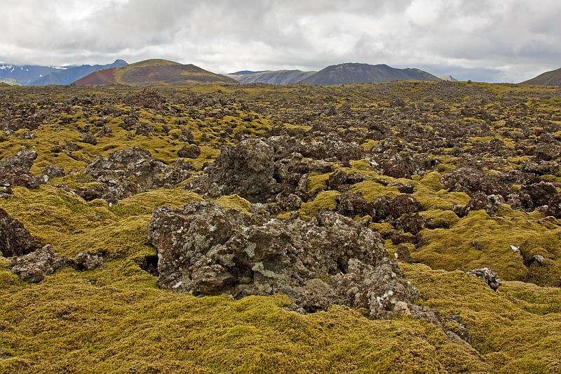 Aa-lava field and moss